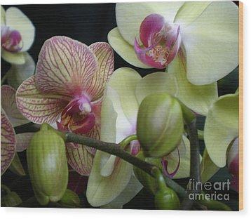 Budding Orchids  Wood Print