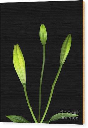 Buds Wood Print by Christian Slanec