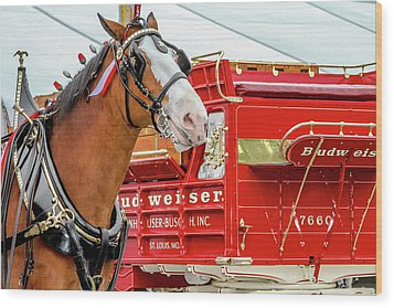 Budweiser Clydesdale In Full Dress Wood Print