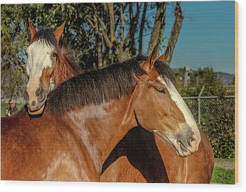 Wood Print featuring the photograph Budweiser Clydesdales  by Bill Gallagher