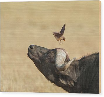 Buffalo And Oxpecker Bird Wood Print by Phyllis Peterson