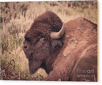 Wood Print featuring the photograph Buffalo Eye On You by Janice Rae Pariza