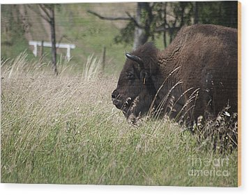 Buffalo Gal 20120724_378a Wood Print