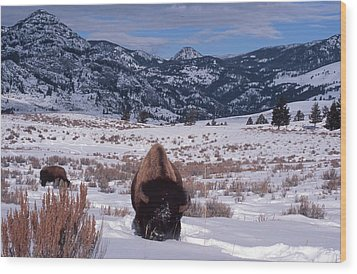 Wood Print featuring the photograph Buffalo In The Rockies by Edward R Wisell