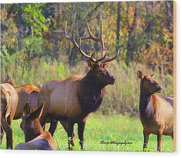 Buffalo River Elk Wood Print