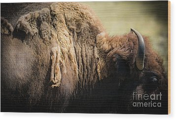 Wood Print featuring the photograph Buffalo Shed by The Forests Edge Photography - Diane Sandoval