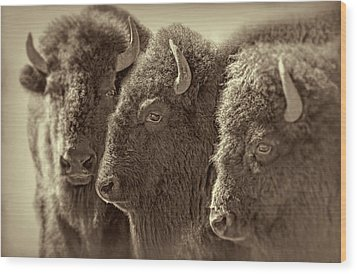 Wood Print featuring the photograph Trio American Bison Sepia Brown by Jennie Marie Schell