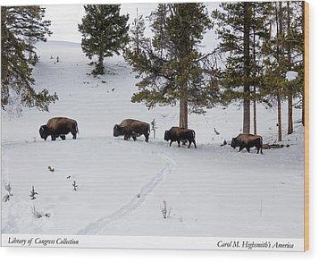 Buffaloes In Yellowstone National Park Wood Print by Carol M Highsmith