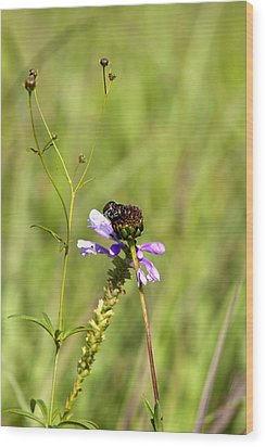 Bug On A Flower 8167 Wood Print by Peter Skiba