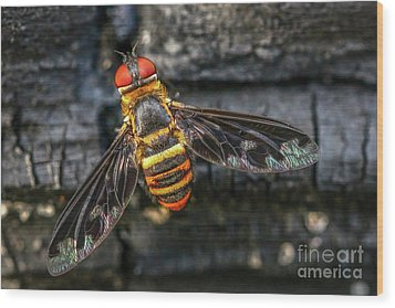 Bug With Red Eyes Wood Print by Tom Claud