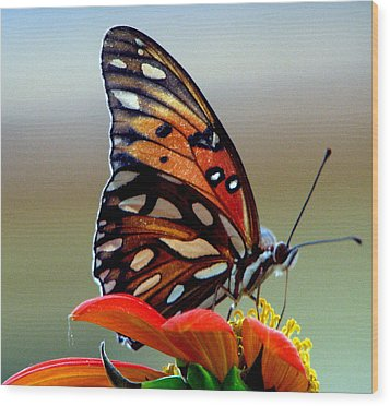 Bugs Eye View Wood Print by Dottie Dees