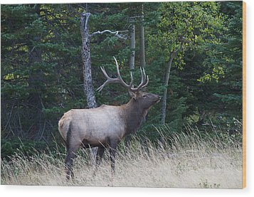 Wood Print featuring the photograph Bull Elk 2 by Aaron Spong