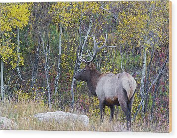 Wood Print featuring the photograph Bull Elk by Aaron Spong
