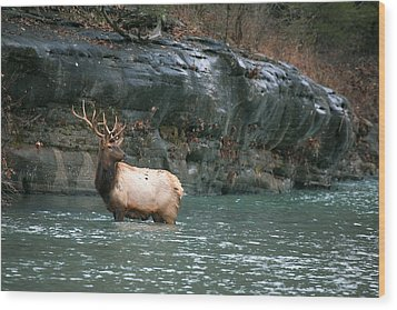 Wood Print featuring the photograph Bull Elk Crossing The Buffalo River by Michael Dougherty