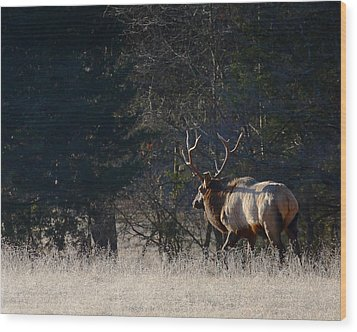 Wood Print featuring the photograph Bull Elk In Frost by Michael Dougherty