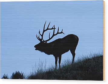 Bull Elk Silhouette Wood Print