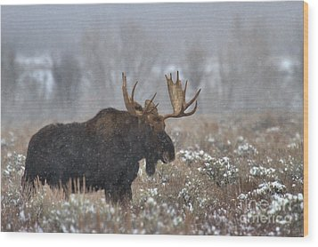 Wood Print featuring the photograph Bull Moose In The Fog by Adam Jewell