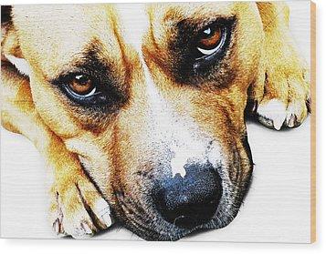 Bull Terrier Eyes Wood Print by Michael Tompsett