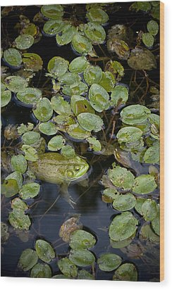 Bullfrog No. 2 - Mystic Connecticut Wood Print by Henry Krauzyk