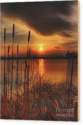 Bullrush Sunset Wood Print by Kim Shatwell-Irishphotographer
