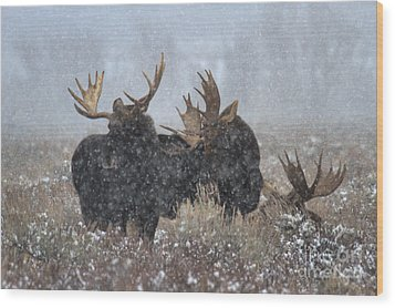 Wood Print featuring the photograph Bulls In The Snow by Adam Jewell