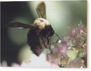 Bumblbee Bzzz Wood Print by Curtis J Neeley Jr