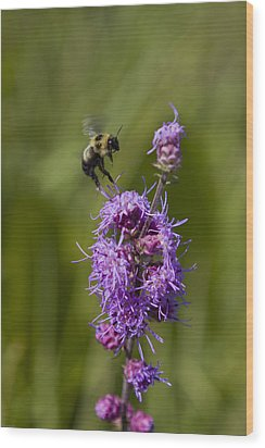 Bumble Bee Dance 8210 Wood Print by Peter Skiba