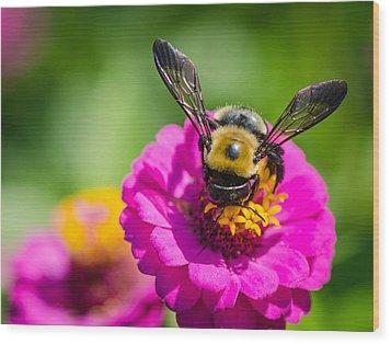 Bumble Bee Macro Image Wood Print