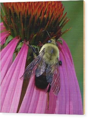 Bumble Bee Macro Wood Print by Martin Morehead