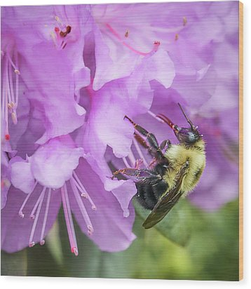 Bumble Bee On Rhododendron Wood Print by Jim Hughes