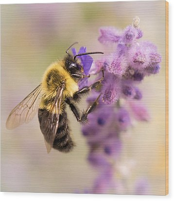 Bumble Bee On Russian Sage Wood Print