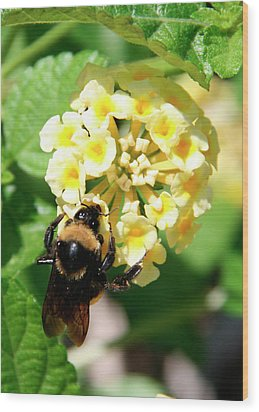 Bumble Bee On Yellow Flowers Wood Print