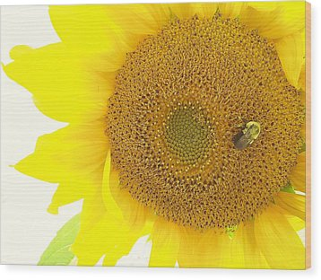 Bumble Bee Sunflower Wood Print