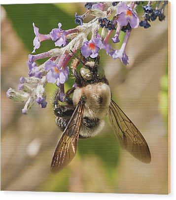 Wood Print featuring the photograph Bumble Bee Up Close And Personal by Lara Ellis