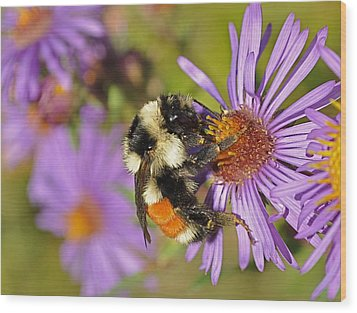Bumblebee On Aster Wood Print by Gerald Hiam