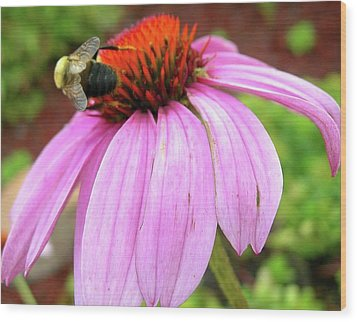 Wood Print featuring the photograph Bumblebee On Coneflower by Randy Rosenberger