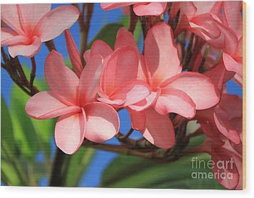 Wood Print featuring the photograph Bunches Of Pink Plumerias by Edward R Wisell