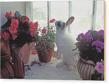 Bunny In Window Wood Print by Garry Gay