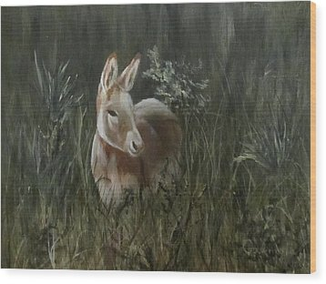 Burro In The Wild Wood Print by Roseann Gilmore