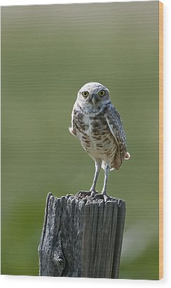 Wood Print featuring the photograph Burrowing Owl by Gary Lengyel