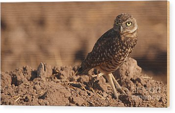 Wood Print featuring the photograph Burrowing Owl Looking Back Over Shoulder by Max Allen