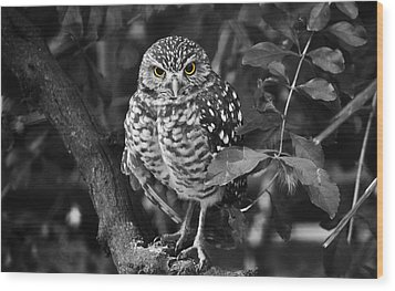Burrowing Owl  Selective Color Eyes Wood Print