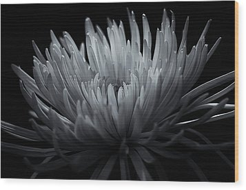 Wood Print featuring the photograph Burst by Sheryl Thomas