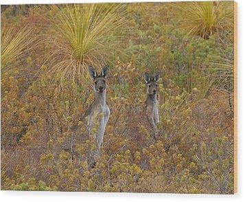 Bush Kangaroos Wood Print