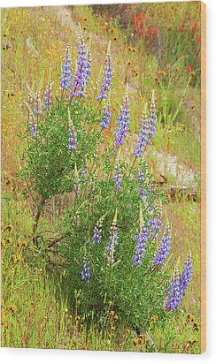 Wood Print featuring the photograph Bush Lupine by Ram Vasudev