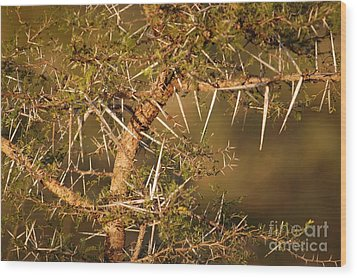 Bush Stinger Wood Print by Andy Smy