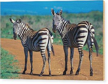 Bushnell's Zebras Wood Print by Tina Manley