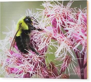 Wood Print featuring the photograph Busy As A Bumblebee by Ricky L Jones