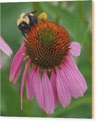 Busy Bee Wood Print by Jean Haynes