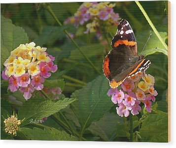Busy Butterfly Side 1 Wood Print by Felipe Adan Lerma